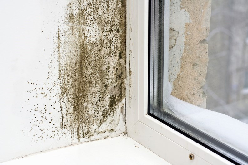 When You Have Mold Damage, Who Pays? - Insuring for