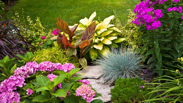 Choosing the Right Plants for Landscaping - Avoiding Common Landscaping Mistakes - You Can't Plant That Here